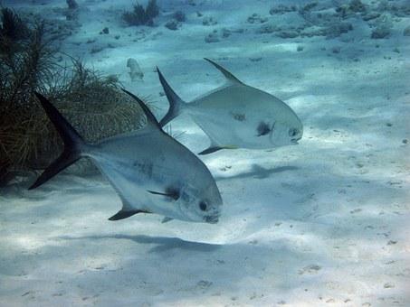 Fish swimming at bottom of ocean